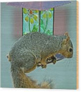 Squirrel At The Bird Feeder Wood Print