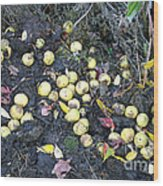 Squirrel Cache In Compost Pile Wood Print