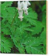 Squirrel Corn Wood Print