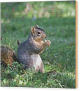 Squirrel Eating A Nut - Eugene Oregon Wood Print