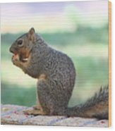 Squirrel Eating Crab Apple Wood Print