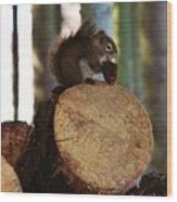Squirrel Eating Pinecones Wood Print