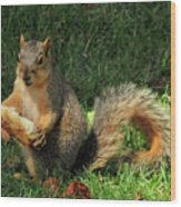 Squirrel Eating Pizza Wood Print