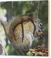 Squirrel Enjoys A Great Meal Wood Print