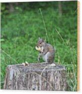 Squirrel Having Lunch Wood Print