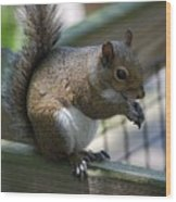 Squirrel II Wood Print