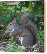 Squirrel IIi Wood Print
