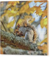 Squirrel In Autumn Wood Print