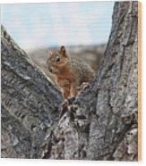 Squirrel In Cottonwood Tree Wood Print