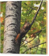 Squirrel In Fall Wood Print