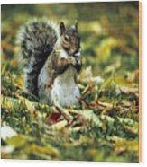 Squirrel In Leaves Wood Print