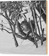 Squirrel In Low Branches Wood Print