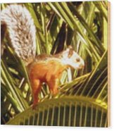 Squirrel In Palm Tree Wood Print