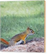 Squirrel In The Park Wood Print