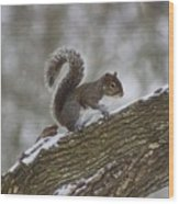 Squirrel In The Snow Wood Print