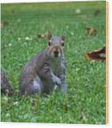 Squirrel Iv Wood Print