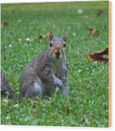 Squirrel Iv Wood Print