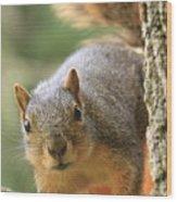 Squirrel Look Wood Print