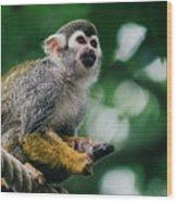 Squirrel Monkey Looking Up Wood Print