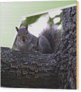 Squirrel On A Limb Wood Print