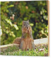 Squirrel On A Log Wood Print