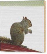 Squirrel On Car Wood Print