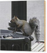 Squirrel On Garbage Can Wood Print by Richard Mitchell