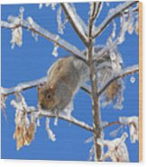 Squirrel On Icy Branches Wood Print