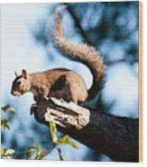 Squirrel On Limb Wood Print