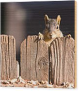 Squirrel On The Fence Wood Print