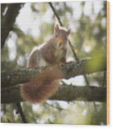Squirrel On The Spot Wood Print