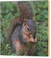 Squirrel Portrait # 3 Wood Print