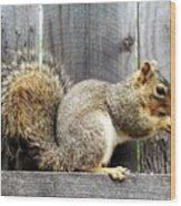 Squirrel - Snack Time Wood Print