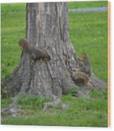 Squirrel Tag Wood Print