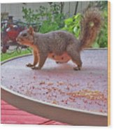 Squirrel Visits Me Wood Print