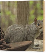 Squirrel With Anchor Wood Print