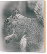 Squirrell Wood Print