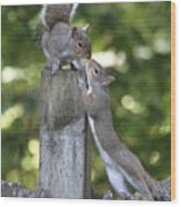 Squirrelly Affection Wood Print