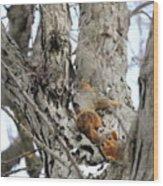 Squirrels At Play Vertically Wood Print