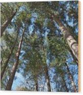 Squirrels Highway  Wood Print