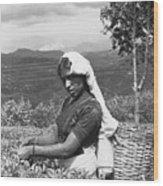 Sri Lanka Tea Plantation Wood Print