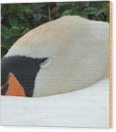 Sssh I'm Sleeping Wood Print