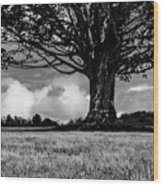 St. Benedict Abbey Single Tree In Summer Wood Print