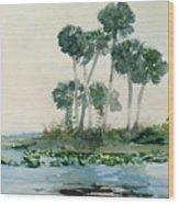 St John's River Florida Wood Print