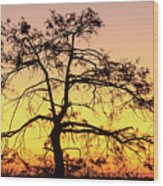 St Johns River Tree Wood Print