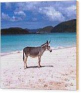 St. John's Wild Donkey Wood Print