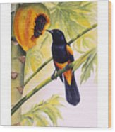 St. Lucia Oriole And Papaya Wood Print by Christopher Cox