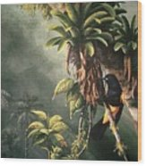 St. Lucia Oriole In Bromeliads Wood Print
