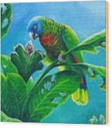 St. Lucia Parrot And Bwa Pain Marron Wood Print
