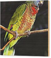St Lucia Parrot Wood Print